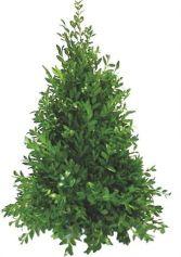 Boxwood Tree Custom Decoration