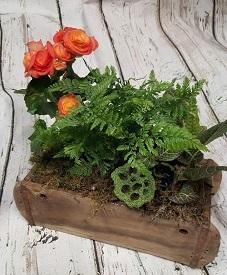 Brick Mould Garden Plants & Terrariums