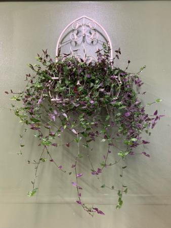 Bridal Veil Jew plant in metal wall hanging planter