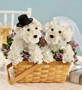 Bride & Groom a-DOG-able