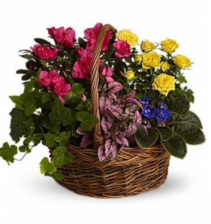 Bright and Cheery Plant Basket Plants