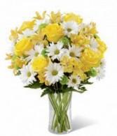 Bright Daisy Get Well