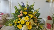 Bright l funeral Tribute  Yellow, Gerbera's Yellow Snapdrogon, soft Peach Roses, and Blue Delphium.