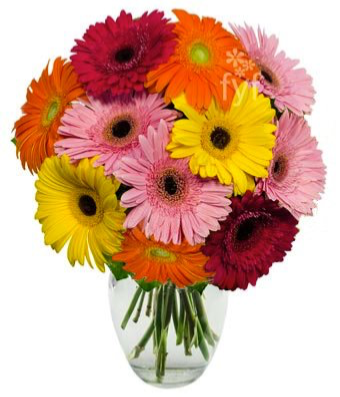 Bright  star  Mix Gerbera