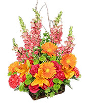 Brilliant Basket Arrangement in Jacksonville, Florida | St Johns Flower Market
