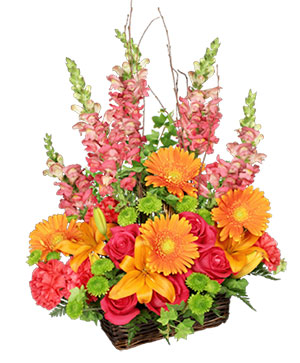 Brilliant Basket Arrangement in Yankton, SD | Pied Piper Flowers & Gifts