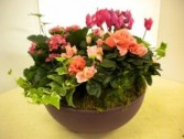 Brilliant Blooms Dish Garden