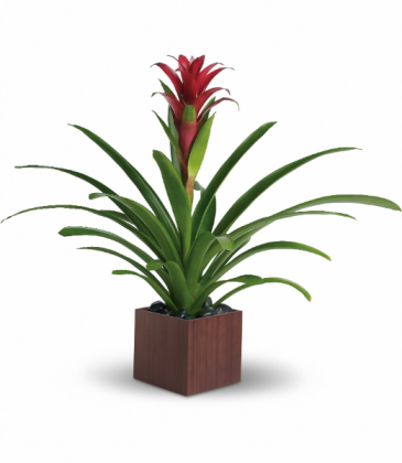 Bromeliad Beauty Container varies