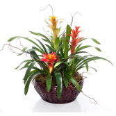 BROMELIAD TRIO Tropical Blooming Planter