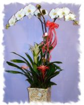 BROMILEADS,BIRDS,&ORCHIDS PLANT