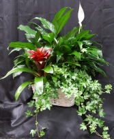 BROMELIAD TRIPLE BASKET