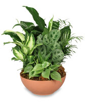 BTS 6- Dish garden of mixed plants