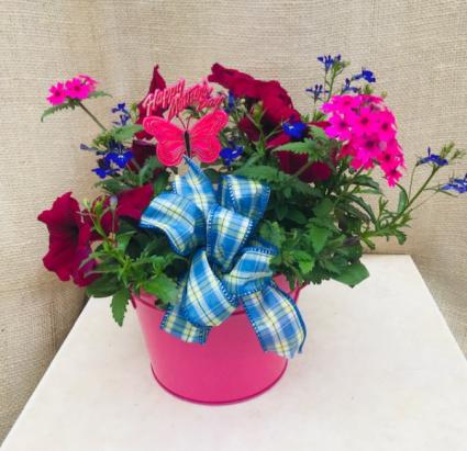 Bucket of Love Outdoor plants