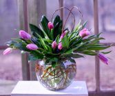 Bubble Bowl Tulips