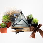 Build-Your-Own Succulent Terrarium Kit Live Plant Kit