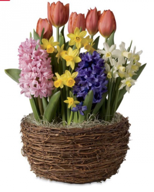 Bulb Garden Anytime Spring in Osage, IA | Osage Floral & Gifts