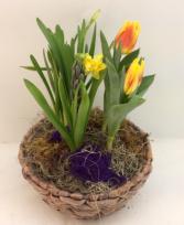 Bulb Garden Basket