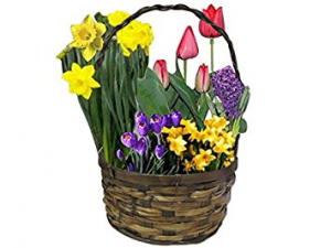 Bulb Garden *baskets may vary in Lebanon, NH | LEBANON GARDEN OF EDEN FLORAL SHOP