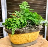 Queen Bee Fern Pot