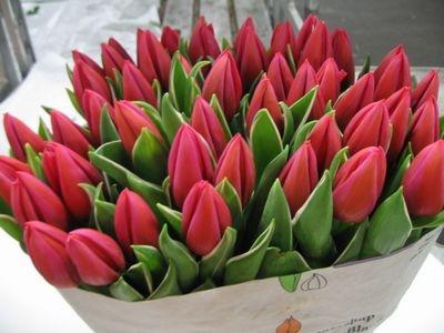 Bundle of Tulips Loose Flowers