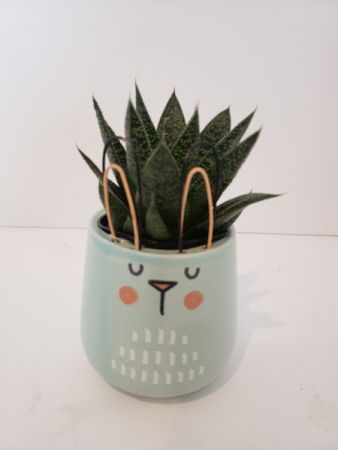 Bunny pot with succulent  Plant