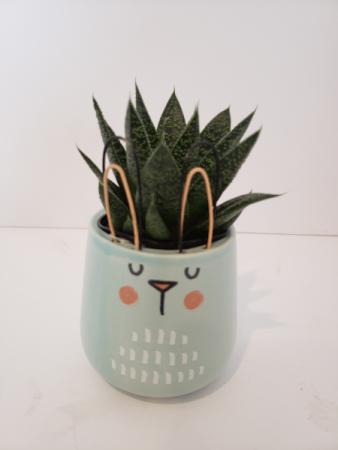 Bunny pot with succulent  Plant