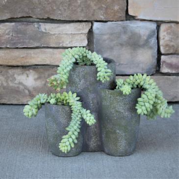 Burro Tail Succulent Garden Green Plant
