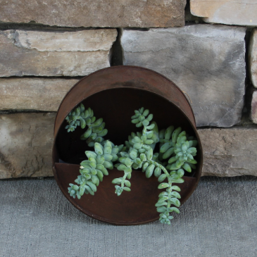 Burro's Tail Wall Planter Succulents