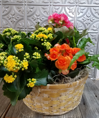 Bursting Blooms Euro Garden