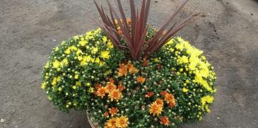 Bushel Basket Plants