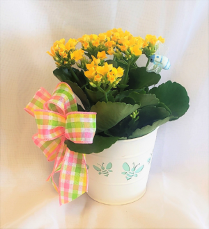 Busy Bee! Administrative Professionals Day in Virginia Beach, VA | FLOWER LADY