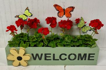 Butterflies and Geraniums