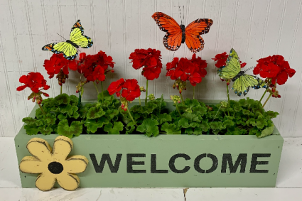 Butterflies and Geraniums