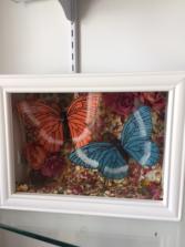 butterflies  Gift