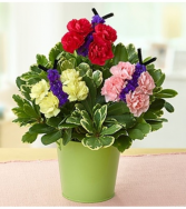 Butterflies in Bloom™ Arrangement