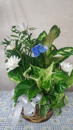 Butterfly Basket Garden Basket Dish garden with fresh cut blooms, butterfly and a bow