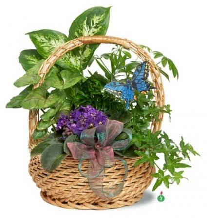 Butterfly Basket
