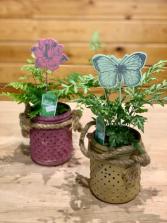 Butterfly Fern Garden Fern Green Plant