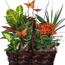 Butterfly Garden Basket Plant Basket