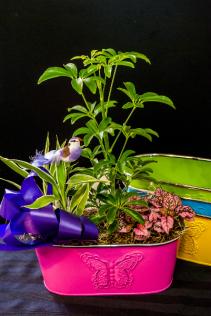 Butterfly Planter Dish garden