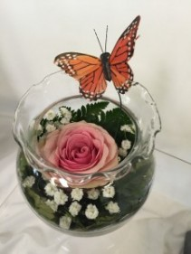 Butterfly Rose Bowl any occasion