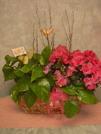 Butterfly trio blooming basket