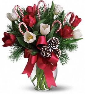 By Golly It's Jolly  in Largo, FL | Rose Garden Florist