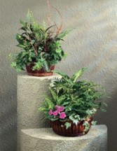 large dish gardens plants