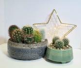 Cacti Gardens Planter