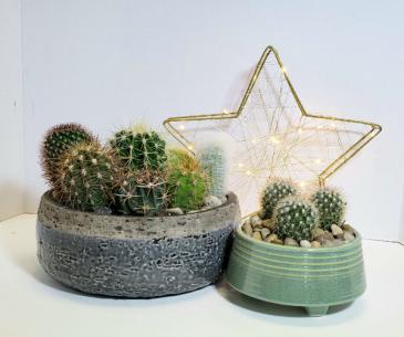 Cacti Garden Planter
