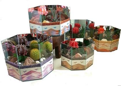 Cacti Sand Garden