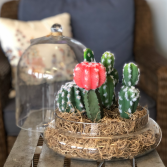 Cactus Cloche Silk Plant Arrangement