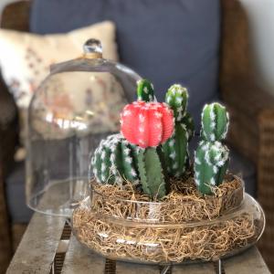 Cactus Cloche Silk Plant Arrangement  in Mattapoisett, MA | Blossoms Flower Shop