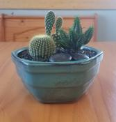 Cactus Garden(6in) Plant